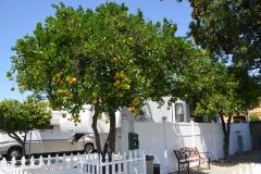 Every site had an orange tree.