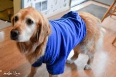 Bailey wears a tee shirt after her surgery.