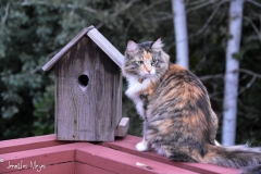 Gypsy is miffed that she can't fit into the bird house.