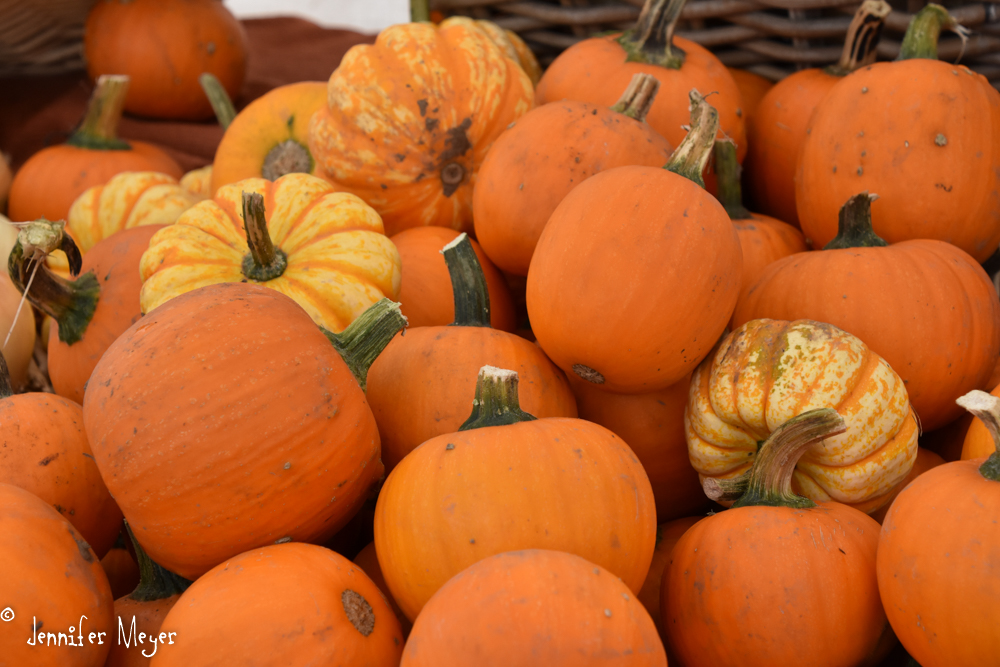 The more traditional pumpkins.