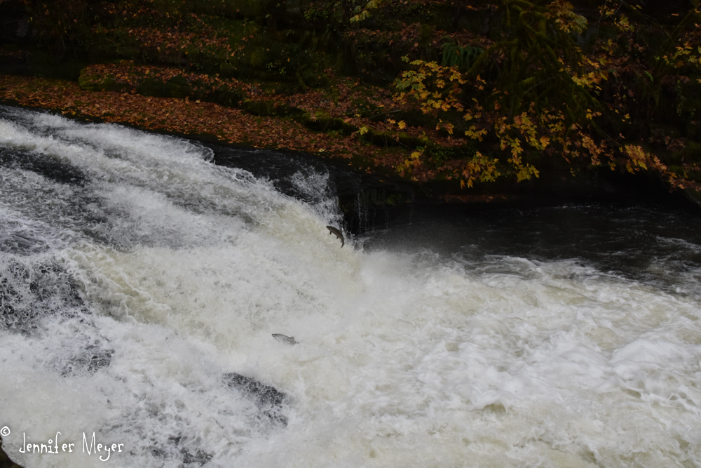 Here's that same waterfall now. Can you see the fish?