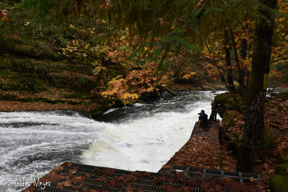 The photographer I'd met at Saturday Market was set up on the fish ladder.