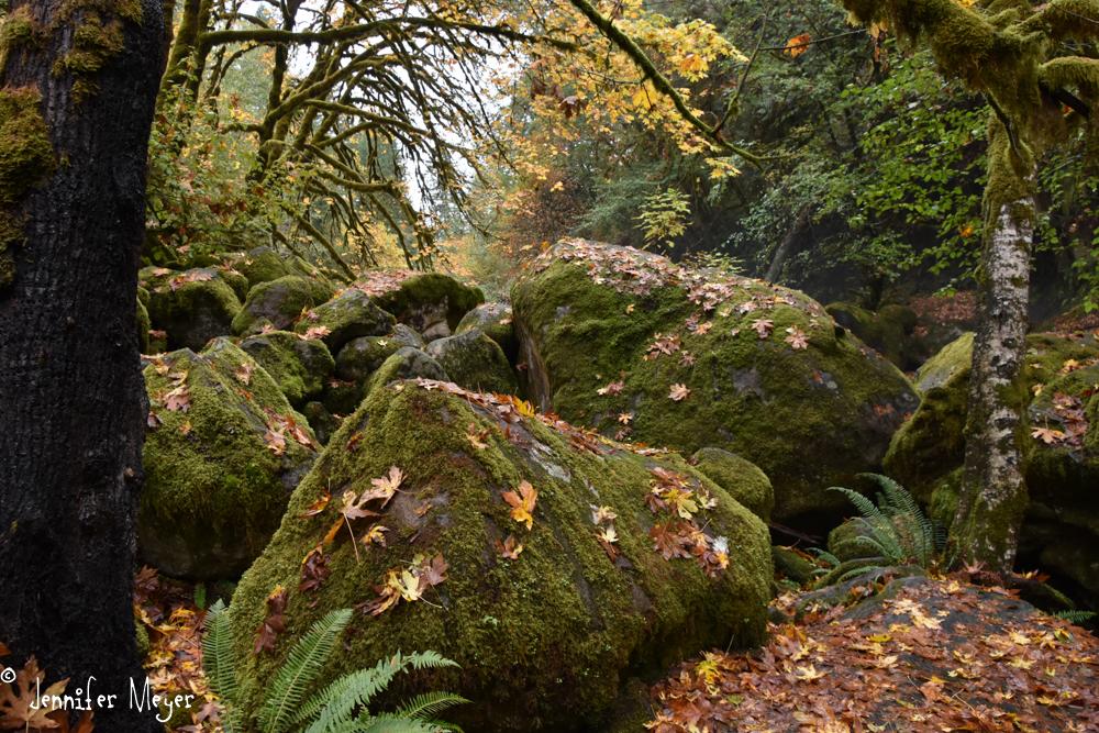 I love Oregon in the fall.