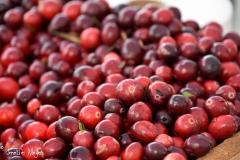 Cranberries from a Bandon bog.