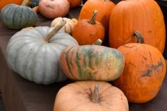 All sorts of pumpkins.