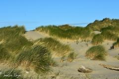 Grassy dune.
