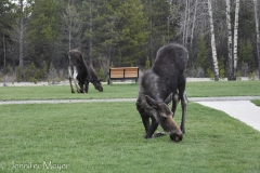 When we drove through Pinedale, we saw this sight in the city park.
