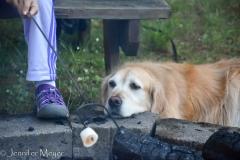 Bailey loves roasted marshmallows.