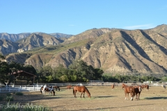Fields full of horses.