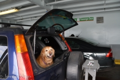 Bailey knows that the ferry means seeing our friends.
