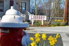 Daffodils in front of the library.