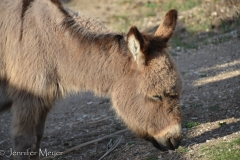 And the burros.