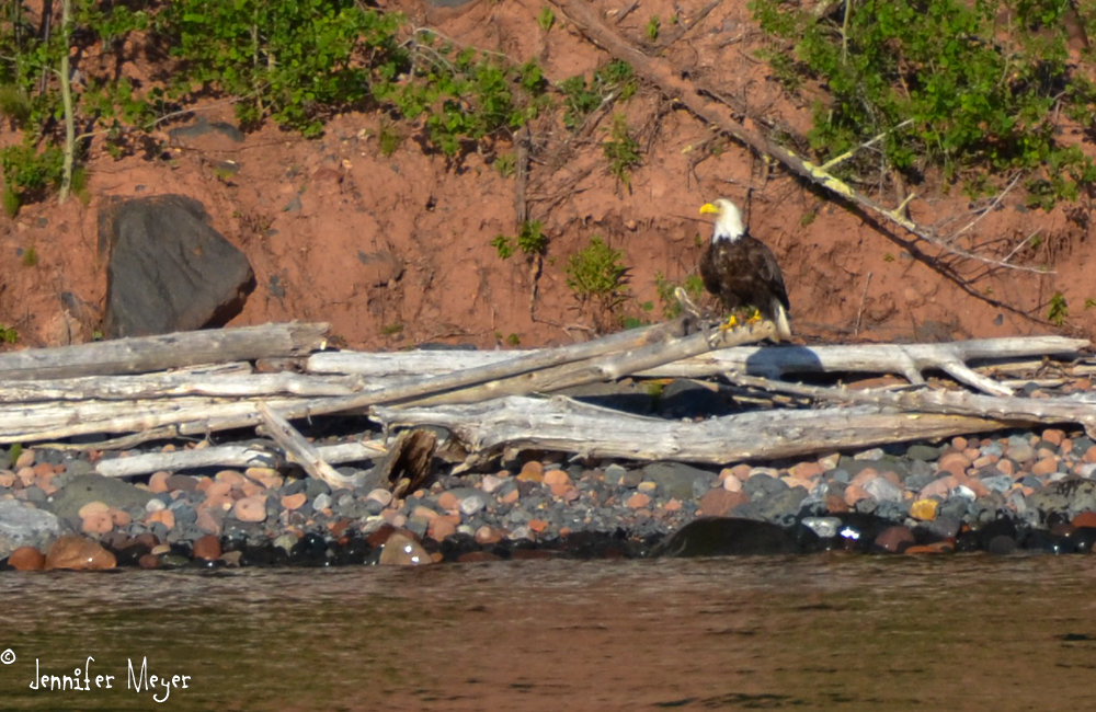 We spotted this eagle on the shore.