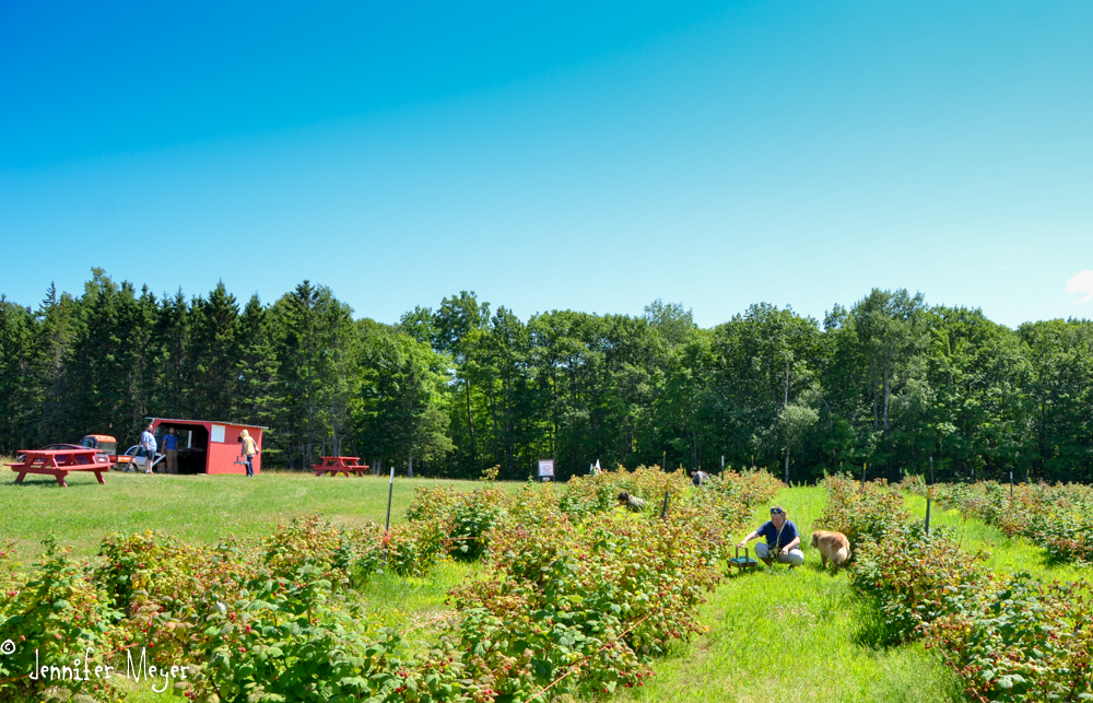 At this place, we could pick raspberries.