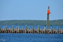 Seagulls and cormorants on pilings.