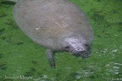 No swimming or boating allowed during manatee season.