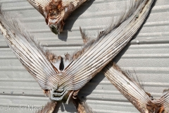...We think they are swordfish tails.