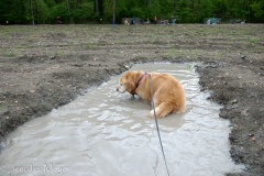When Bailey got hot, she helped herself to the mud puddle.