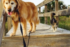 Bailey and Gypsy take the boardwalk to the beach.