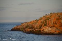 Orange lichen on the rocks.