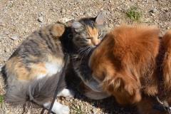 Gypsy gives Bailey's face a good bath.