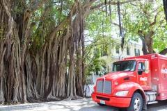 Incredible banyan tree.