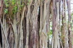 "It grows ""walking roots."""