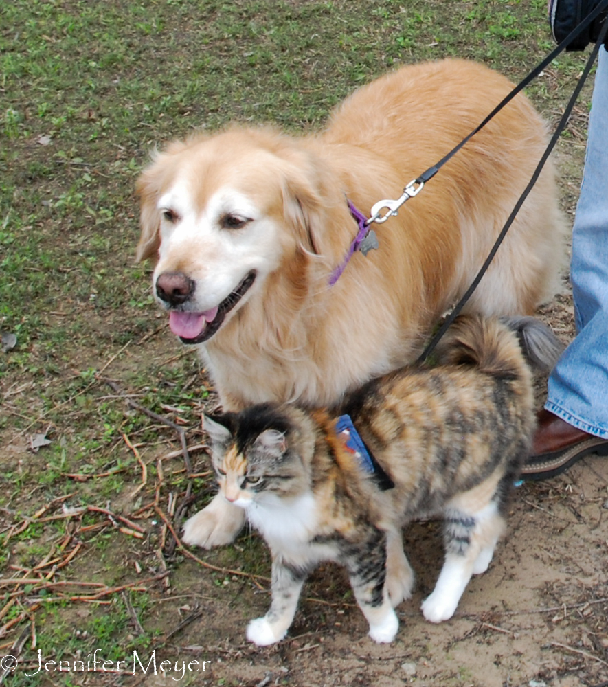 They love walking together.