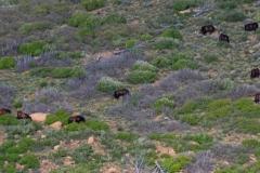 Wild horses on a hillside.