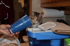 Gypsy is fascinated by our ritual of filling the water filter each night.