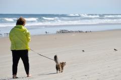 Gypsy stalks some beach birds.
