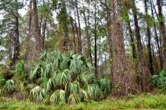 We were backed onto a Florida jungle.