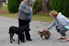 Gypsy met a lab puppy.