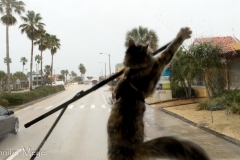 Gypsy is tormented by the wipers.