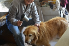 Bailey gets a blow-dry.