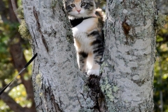 When in doubt, climb a tree.