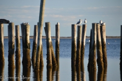 Old pilings and gulls.