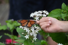 Several butterflies were enjoying the warm day.