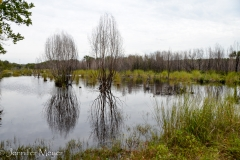 Wetlands after a recent rain.