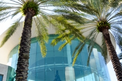 Palm tree sentinels.