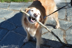 Nothing like a good stick!