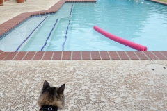 Gypsy was plain freaked out by the pool.