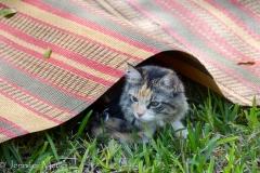 Gypsy takes refuge.