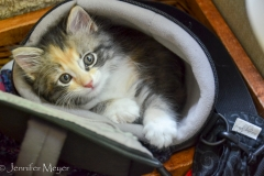 Gypsy in my camera case again.