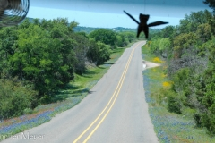 Our winged cat flies over the view.
