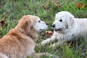 Bailey and her buddy, Walker.